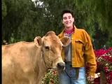 K.D. Lang Oldie but Goodie Vegetarian PSA - BE Compassion!