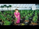 Репортаж CNN лечение эпилепсии маслом из Марихуаны. Часть 1