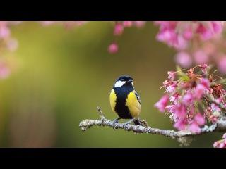природа птицы животные весна  № 290707 загрузить