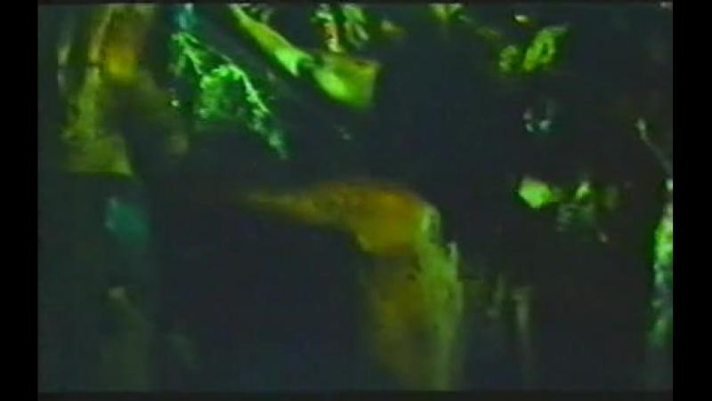 🐱 Первобытные / Primitif (1980)