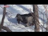 Козла Тимура прооперировали во Владивостоке