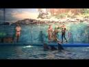 Как дельфины танцуют танец ламбада