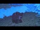 Братец медвежонок 2003 трейлер