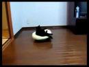 Кот и Робот Пылесос делают уборку!