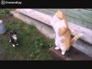 Только русские коты так могут. Смешно до боли