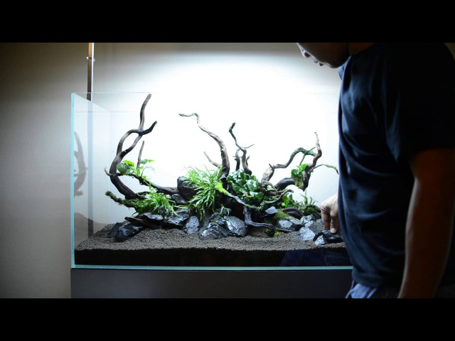 Step by step aquascape time lapse Aqueous Reflection 90cm Aquavas