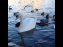 """Ильшат Шабаев on Instagram Прага подарила нам волшебные дни ✨ Прага Чехия Prague Praga Praha путешествие мир лебеди танцы танцынатнт тнт Ильшат…"""""""