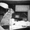 Приют животных Надежда г.Бердск