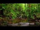 Красивая Расслабляющая музыка для медитации и релаксации На фоне звуков леса