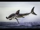 Путешествие по Африке Акулы Познавательный фильм