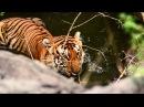 Ricky Kej Jaya Hai Kannada Thaye GRAMMY® WINNER Karnataka WildLife and Nature Video