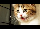 Top Funny Cats and Kittens Playing, Dancing Epic Compilation