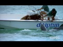 Dolphin Kisses Dog, Jumps for Joy!