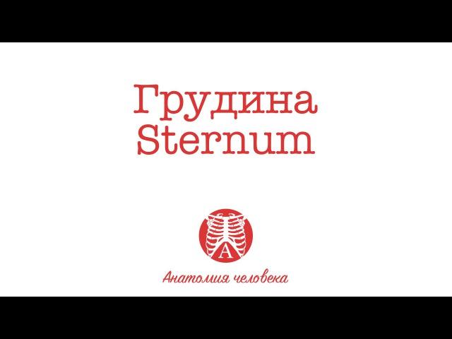 Анатомия грудины. Sternum