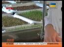 Чому лікарі радять пити сік з пшениці - ранок по-київськи Dr.R.Koval