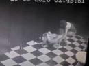 Скрытая камера в женском туалете. Две подруги в хлам занимаются....