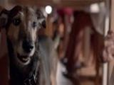 МТС - Свобода быть своим - Новая реклама с собакой (щенком) - Тариф Супер 2014 - Собака
