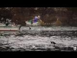 Интервью Рика О'Барри всемирно известного защитника дельфинов
