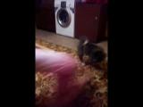 моя сестра тренировала собаку по имни Макита