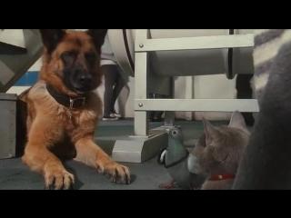 Кошки против собак 2 - Месть Китти Галор (2010)