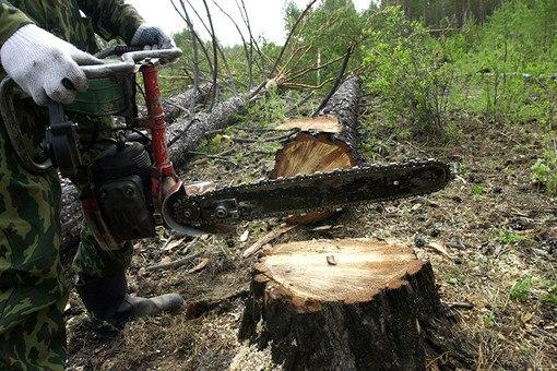 Двое жителей Якутии попались на незаконной вырубке леса