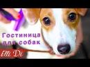 ОДИН ДЕНЬ ЩЕНКА ГОСТИНИЦА ДЛЯ СОБАК Elli Di Собаки