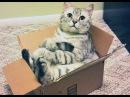 Lustige Katzen Videos Zum Totlachen 2016 [CUTEST, BEST, NEW, FUNNIEST]