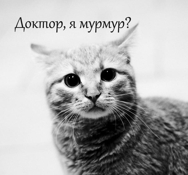FHOHCqxkWYo.jpg