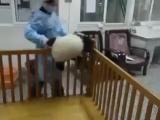 Панда пытается сбежать
