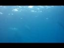 Купание с китовыми акулами 😁😜