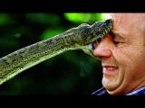 Топ 10 самых опасных змей, способных убить человека. Кузница Фактов.