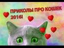Видео приколы про кошек 2016 года! Смотреть всем, СМЕШНО ДО СЛЕЗ!