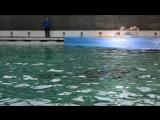 Дельфинарий на Крестовском СПБ. Дельфины.