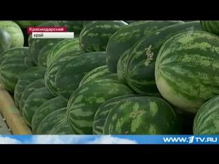 2013 Новости сегодня - Кубань. Урожай гигантских арбузов..