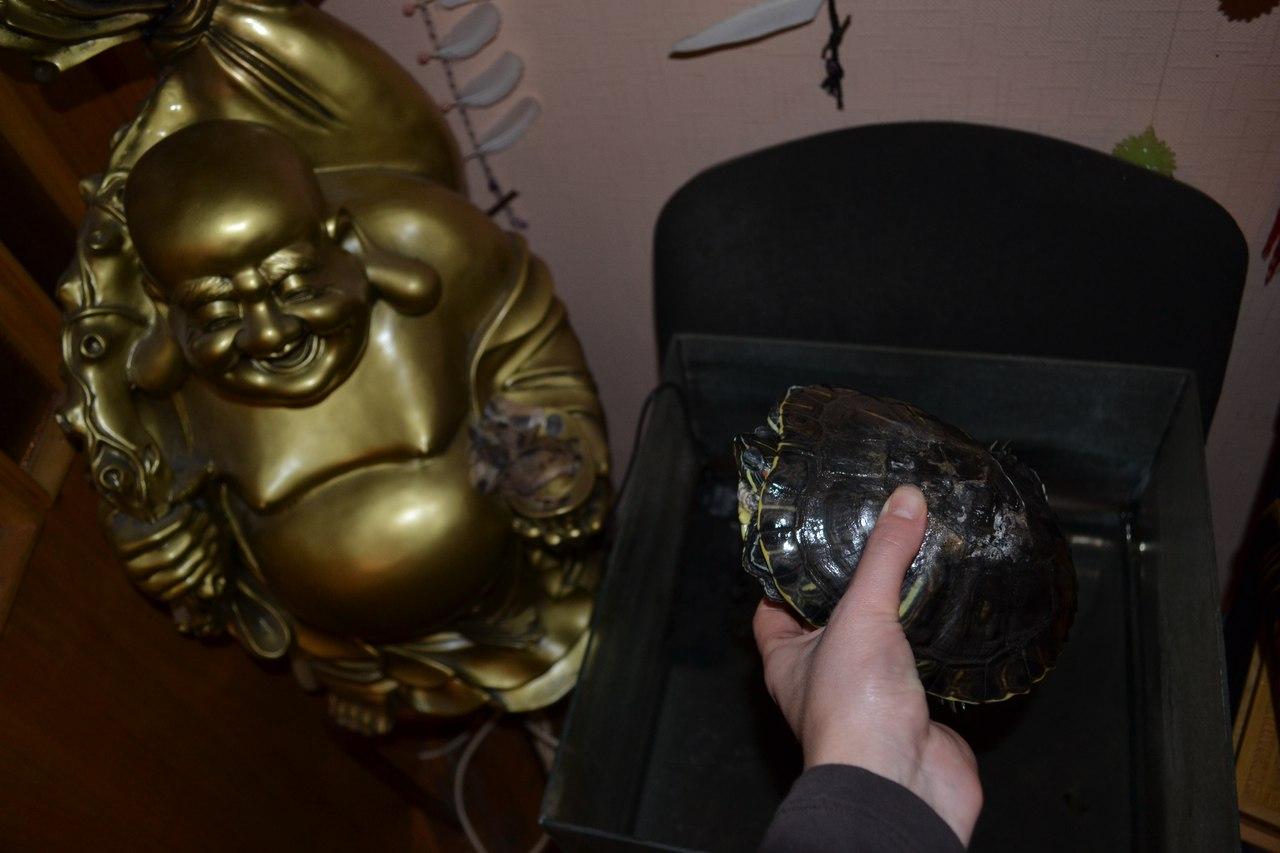 Магические животные. Черепаха в магии. Магия черепах.  JkW5Ko7f8HI