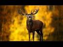 Красный Бор Документальный фильм Krasny Bor Documentary film