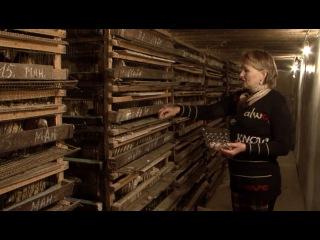«Сельский порядок». Перепелиные яйца из Белгородского района