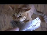 Очень ЖАДНЫЙ кот. Смешное видео