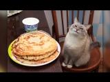 Nastroenie+ лицо кота