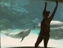 Игра с дельфином