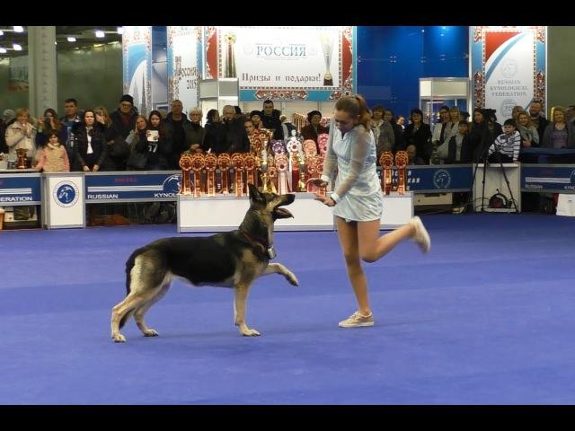 Танцы с собаками Россия 2015 Dog Dancing Canine Freestyle
