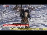 Тигр Амур стал учить козла Тимура охотиться и позволил пить из своей миски