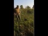 Прикол. Птица гуляет за охотником