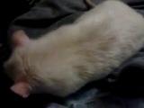 Жизнь Крысы