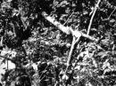 Зеленый дом 1964 фильм смотреть онлайн