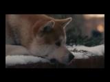 Смотреть всем. Хатико - самый лучший друг. Отрывки из фильма про самую замечательную породу собак Акита ину.