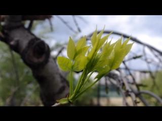Ludovico Einaudi - Life(Весна на Набережной)