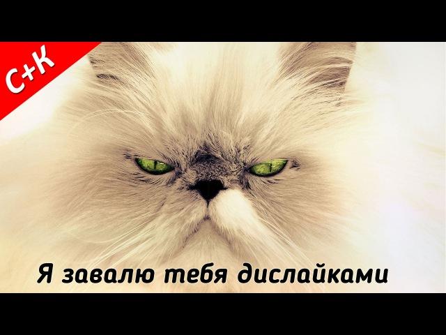 Злая кошка зритель Я завалю тебя дислайками