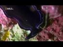 Самые Странные в Мире Животные . Чудаки в Океане . Документальный Фильм National Geographic