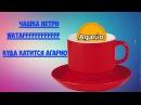 чашка петри агарио